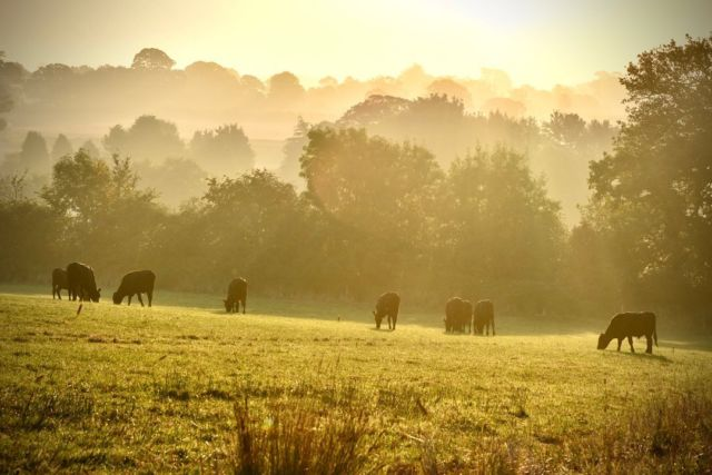 Harvest is done for the year just as the weather starts to feel a bit more autumnal 🍂 📸 @manonfosb   #harvest2021 #autumn #cattle #sunrise #kestrel #greattew #greattewestate